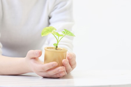 plant hand: Hands and potted