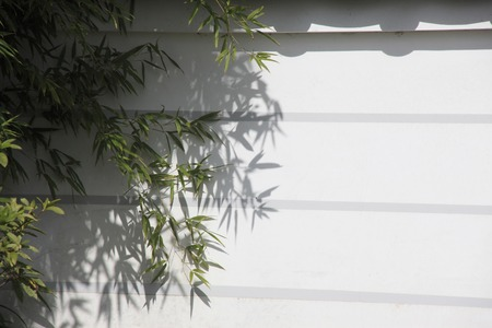 bamboo leaves: Bamboo leaves and wall Stock Photo
