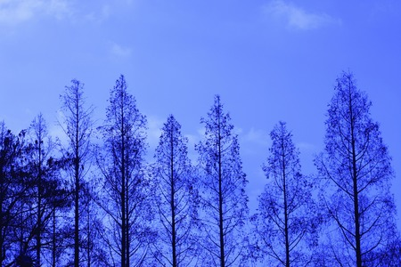 metasequoia: Metasequoia
