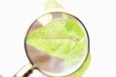 Futaba and magnifying glass Stock Photo