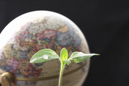 teaching material: Globes and Futaba