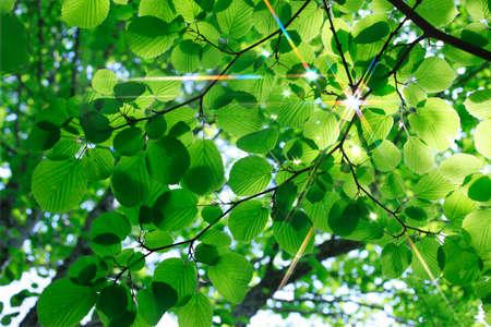 Leaf of the fresh green