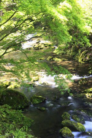 redeye: Akame 48 falls ravine