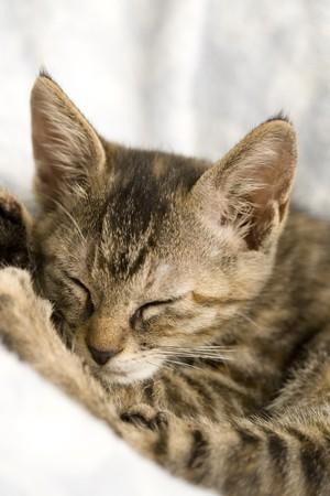 Cat 版權商用圖片 - 6841822