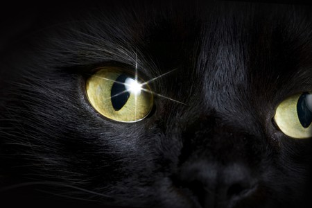 living thing: Close-up eye of black cat