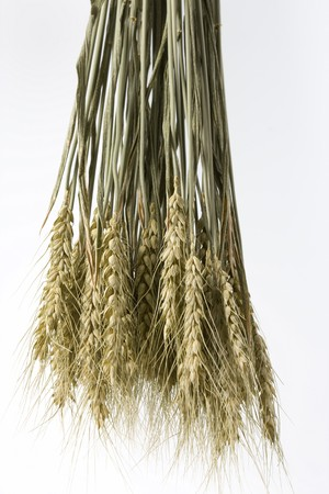 buch: Hanging buch of wheat isolated on white background