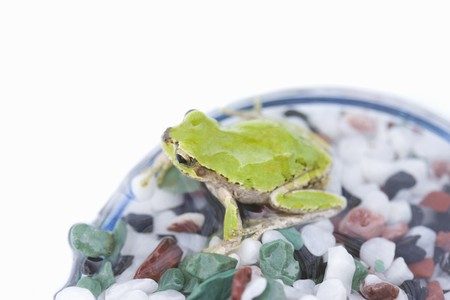 living thing: Frog Stock Photo