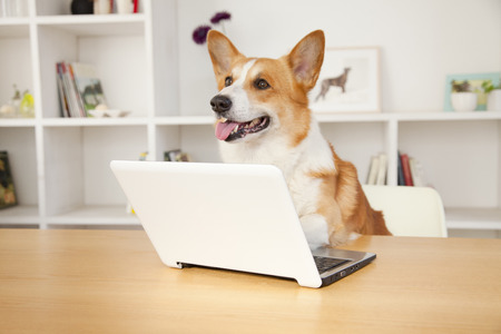 CORGI touch laptop