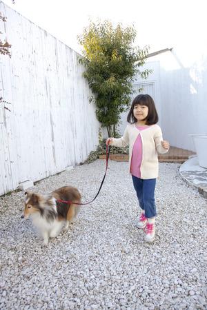 seres vivos: Perro pastor de Shetland y ni�as para un paseo
