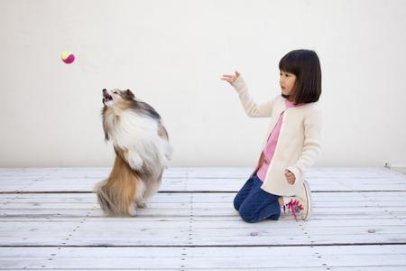 seres vivos: Girl throw the Shetland Sheepdog and the ball