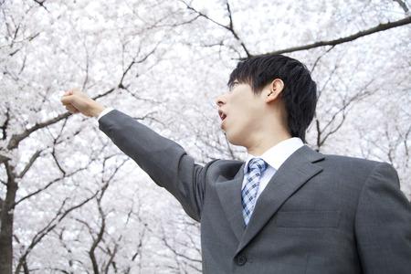 wnętrzności: Businessman to the guts pose under the cherry tree Zdjęcie Seryjne