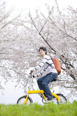 Men run the cherry trees by bicycle