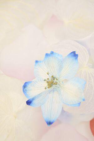 florid: Flower petals