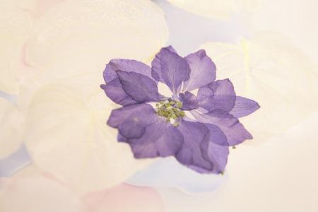 花の花弁 写真素材 - 39909744