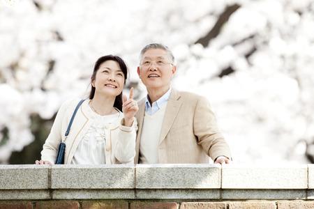 Senior couple watching cherry blossoms