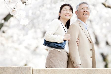 ancianos caminando: Pares mayores que miran hacia el cerezo Foto de archivo