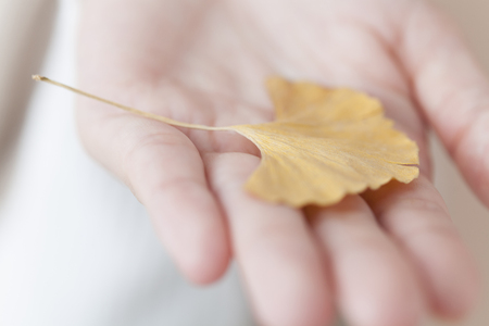 ginkgo leaf: Women who put a ginkgo leaf in the palm of your hand Stock Photo