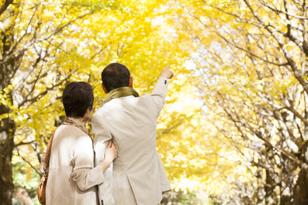 Senior couples snuggle under the ginkgo tree-lined Reklamní fotografie
