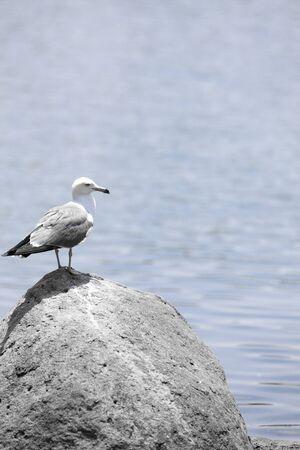 living organisms: Bird Stock Photo