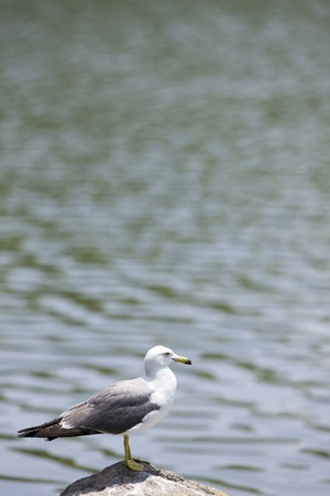 living thing: Bird Stock Photo