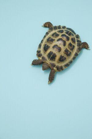 living thing: Tortoise
