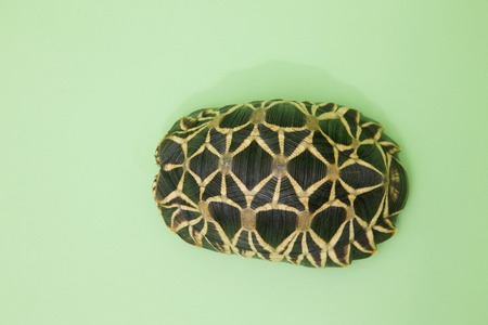 living thing: Turtle