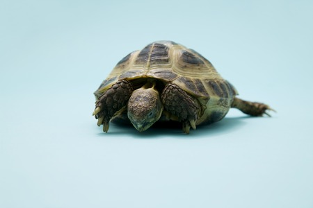 living organism: Tortoise