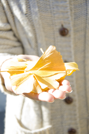 one hand: Ginkgo leaves that are placed on the one hand Stock Photo