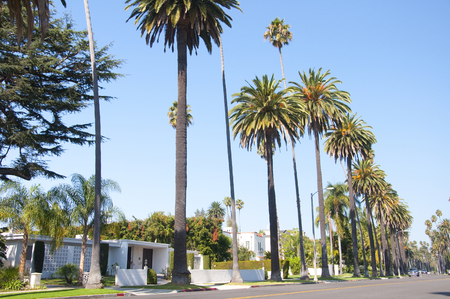 treelined: Palm tree-lined Beverly Hills