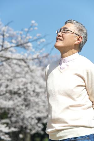 桜の花の木の中を歩く年配の男性