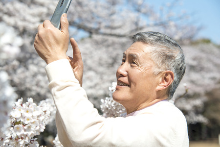 Senior men take Sakura with Smartphone