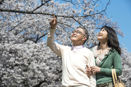 Senior couple walking under the cherry blossoms photo