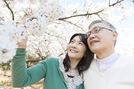 Senior couple watching cherry blossoms photo