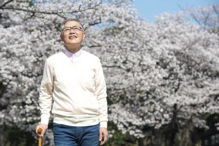 Cherry Blossom senior men to walk in trees Stock Photo