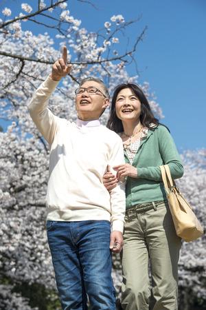 Senior couple walking under the cherry blossoms Stock Photo