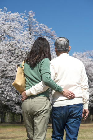 back shot: Back shot of senior couples to stroll under the cherry tree