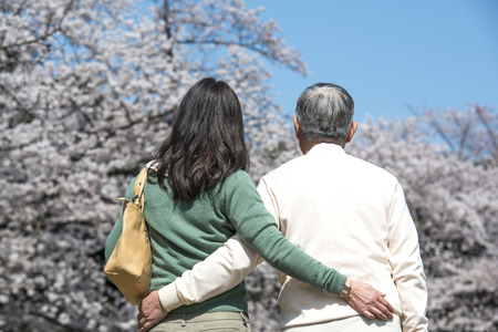 stroll: Back shot of senior couples to stroll under the cherry tree