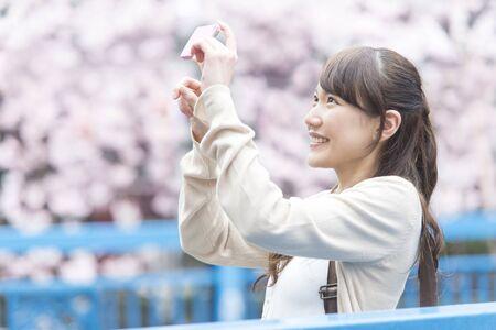 スマート フォンで桜の木を取る女性