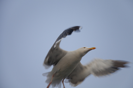 the seagulls: Seagulls fly