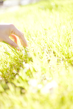 lend a hand: Women who lend a hand to the lawn