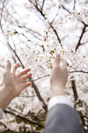 reach out: Hand of high school girls that reach out to Sakura Stock Photo