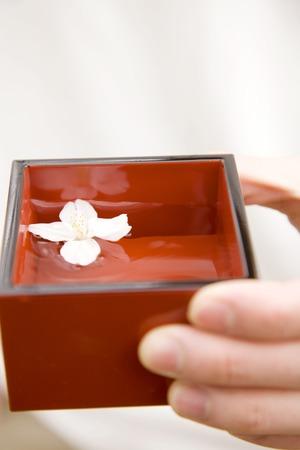 日本酒: Japanese sake and cherry blossoms 写真素材