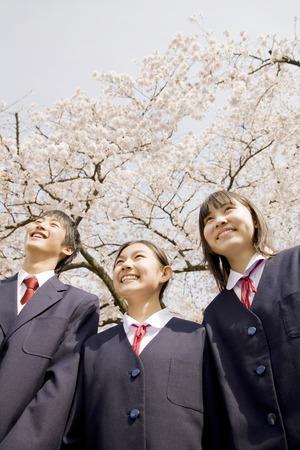 中学生男女が桜の木の下で笑っています。