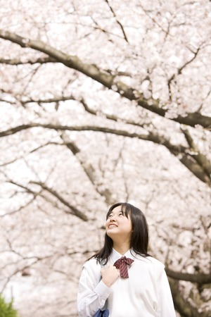 Middle school girls are laughing under the cherry blossoms Stock Photo