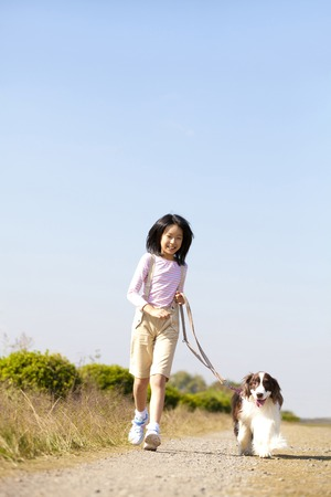 springer spaniel: Girl to walk with English Springer Spaniel