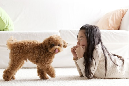 to be pleasant: Girl stare toy poodle