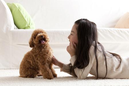 poodle: Girl Kawaigaru a Toy Poodle