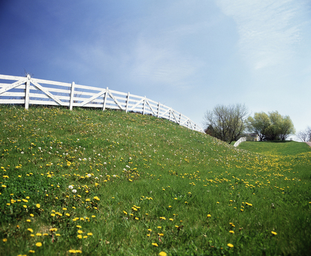 plateau of flowers: White fence