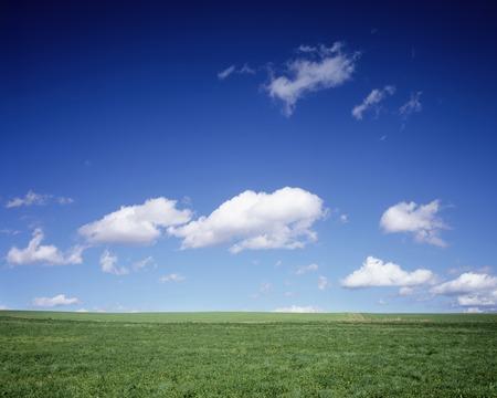 grassland: Grassland of Biei