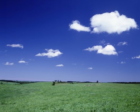 biei: Grassland of Biei